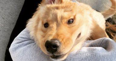 """تبدو-كـ""""يونيكورن""""-""""راى""""-كلبة-مميزة-بأذن-واحدة-في-منتصف-رأسها.-وهذه-قصتها"""