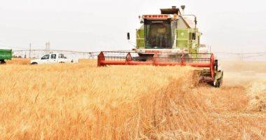 تجار:-الجزائر-تطرح-مناقصة-لشراء-50-ألف-طن-من-القمح-الصلد