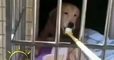 صينيون-يبدعون-لإطعام-الحيوانات-بطرق-ذكية-بعد-تفشى-كورونا.-اعرف-القصة؟