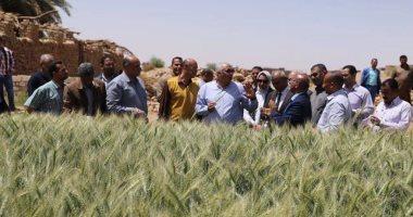 محافظ-الوادى-الجديد-يوجه-بتعميم-تجربة-زراعة-تقاوي-القمح-عالية-الإنتاج