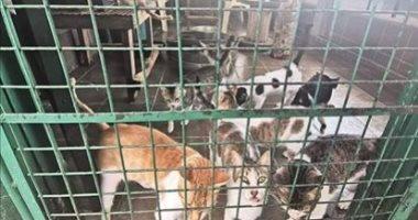 كورونا-يفرض-حظرا-على-الحيوانات-الأليفة-فى-الفلبين.-ما-التحديات-التى-تواجهها؟