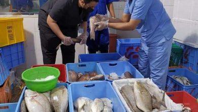 صورة الفرق الرقابية بالمدينة المنورة تضبط أكثر من ٣٠ كيلو من الأسماك الفاسدة في الأسواق