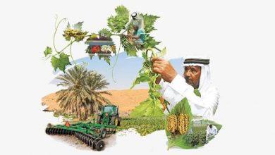 صورة الإمارات تسبق العالم في تحقيق معادلة الأمن الغذائى