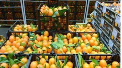 صورة عاجل : وزير الزراعة يعلن فتح السوق البرازيلية أمام الموالح المصرية