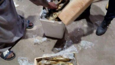 Photo of اعدام 250 كجم اغذية فاسدة وتحرير 7 محاضر لمخالفة الاشتراطات الصحيةبأولاد صقر