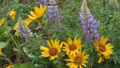 صورة كيفية الاهتمام بالنباتات في فترة التزهير
