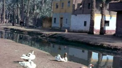 صورة الريف المصري