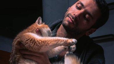 صورة خالد السنعوسي: الحرص في التعامل مع الحيوانات الأليفة مطلوب.. تحصنًا من كورونا