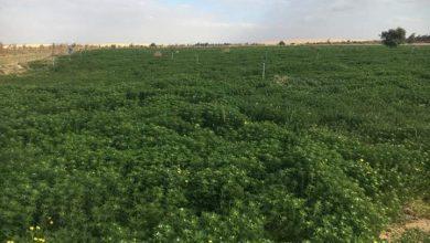 """صورة """"الحقونا بيطفشونا """" مستثمرون زراعيون بالمنيا يستغيثون بالرئيس السيسي"""