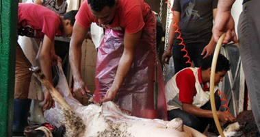 صورة مدير مستشفى الحميات بأسوان :نفخ الاضحيه بالفم يسبب خطرا على صحة المواطنين