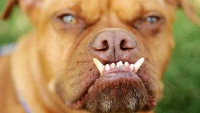 صورة لهذا السبب .. كلب العائلة قتل التوأمان