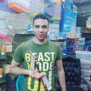 عبدالرحمن ناصر يمسك حرباء