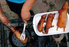 """صورة """"ملاوي"""" وأكل لحم الفئران كوجبه طبق رئيسي"""