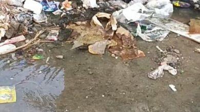 صورة معاناة أهالي العجمي مع وباء الصرف الصحي