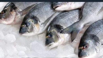 صورة إنخفاض أسعار الأسماك قبل رمضان.. وتوافر كميات هائلة منها