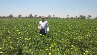 صورة وكيل زراعة الفيوم يتفقد زراعات القطن بنواحي المحافظة