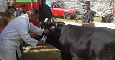 صورة تحصين 65 ألف رأس ماشية ضد الحمى القلاعية والوادى المتصدع ببنى سويف