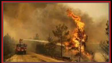 صورة الكويت ترسل فريق إطفاء إلى تركيا للمساعدة في إخماد الحرائق