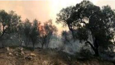 صورة تونس.. اندلاع أكثر من 150 حريقا خلال 36 ساعة الأخيرة