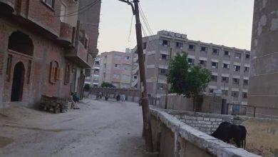 صورة أعمدة الإنارة المتهالكة تهدد حياة طلاب وسكان قريه دلجا في المنيا