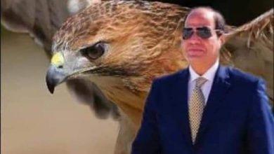 صورة قرأت عن حكم نهائي بات في محاولة اغتيال الرئيس السيسي وولي العهد السعودي السابق بمكة المكرمة اثناء التواجد لأداء مناسك العمرة 